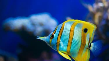 Les poissons vont-ils bientôt disparaître?