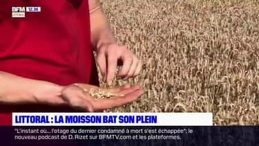 Pas de Calais : un bilan mitigé pour les récoltes de blé cette année