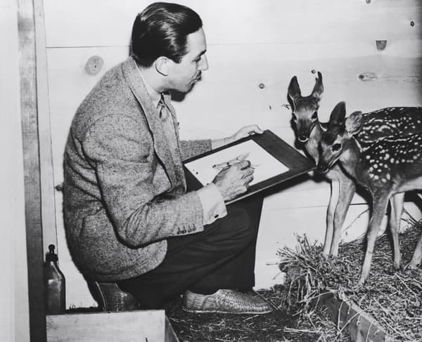 Walt Disney dessinant un faon en 1942.