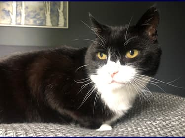 Le chat Palmerston