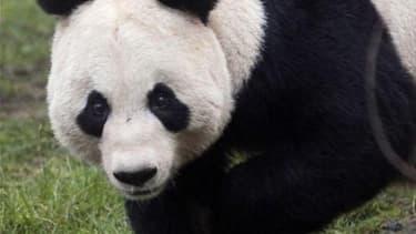 La vénérable BBC est accusée de sexisme pour avoir inclus Tian Tian, femelle panda géant, dans sa liste des douze figures féminines de 2011. /Photo prise le 16 déecmbre 2011/REUTERS/David Moir