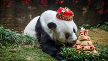 Le panda géant Basi était une star en Chine, où chacun de ses anniversaires était célébré avec faste devant les caméras