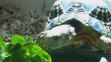 Exposer des enfants à des tortues pourrait représenter un risque pour leur santé.