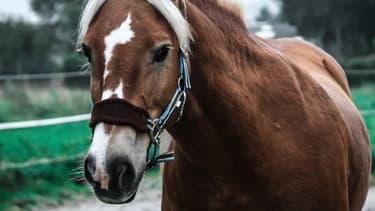 Un cheval est mort dans la commune d'Hirson (Photo d'illustration).