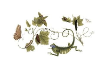 Un doodle pour célébrer Maria Sibylla Merian