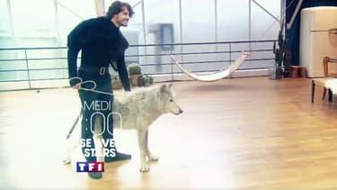 """Le danseur Anthony Colette, partenaire de Joy Esther, avec le loup Mako, qui n'apparaîtra finalement pas dans """"Danse avec les stars"""""""