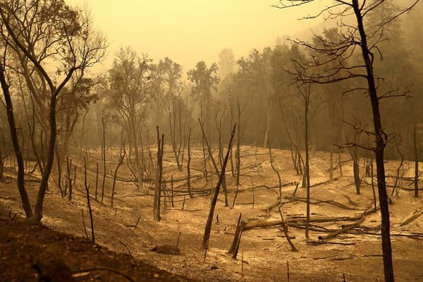 Des arbres carbonisés après l'incendie Carr qui a ravagé la zone de Whiskeytown en Californie le 29 juillet dernier.