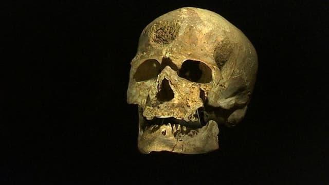 Un crâne d'Homo sapiens, dont cette nouvelle espèce se rapproche