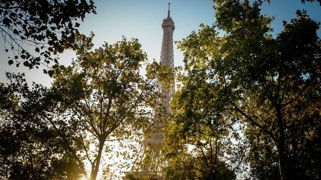 Paris veut planter 170.000 arbres dans la capitale en six ans (photo d'illustration).