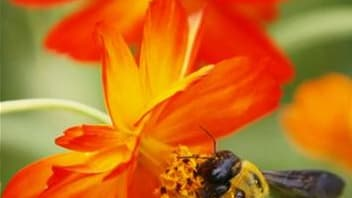 Une campagne de recensement et de protection des abeilles sauvages en milieu urbain a été lancée dans l'agglomération lyonnaise, dans le cadre du programme européen Urbanbees. /Photo d'archives/REUTERS/Toru Hanai
