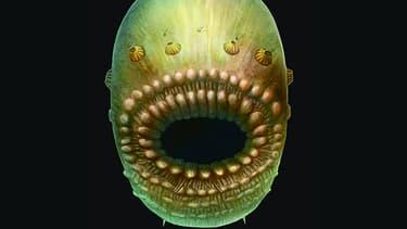 Saccorhytus ne mesurait qu'un millimètre et était très évolué pour sa lointaine époque.