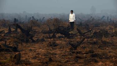 Le président de l'Indonésie, Joko Widodo face à une prairie dévastée par les flammes ce 23 septembre.