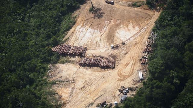 Une exploitation illégale de bois dans la forêt amazonienne au Brésil.