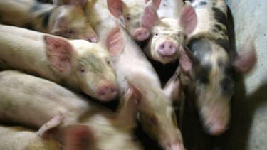 Le prix du kilo de porc est tombé à 1,07 euro.