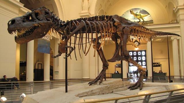 Un T.rex au musée Field de Chicago, aux Etats-Unis.