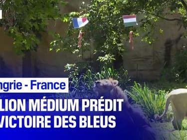 Euro: un lion médium prédit la victoire de la France face à la Hongrie ce samedi