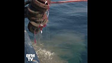 Au large de Vallauris, des milliers de pneus sont extraits de la mer
