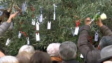 L'olivier qui sera intégré au jardin du souvenir