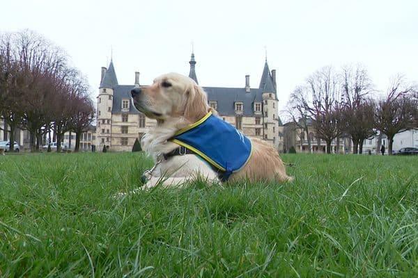 Ouchi, le chien d'assistance judiciaire à Nevers.