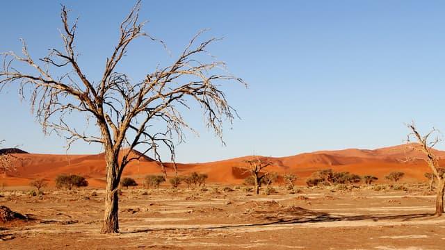 Selon une étude américaine, le changement climatique rend moins sensibles les végétaux à la sécheresse. (image d'illustration)