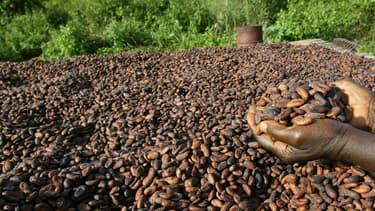 Des fèves de cacao sont exposées au soleil dans un village de producteurs de cacao, près de Vavoua en Côte d'Ivoire, le 29 octobre 2002.