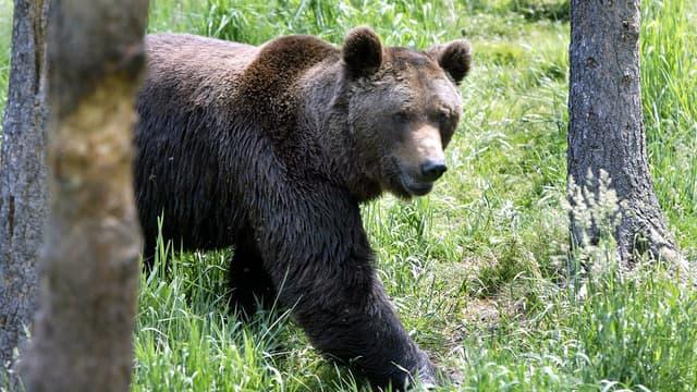Une ourse abattue en Italie