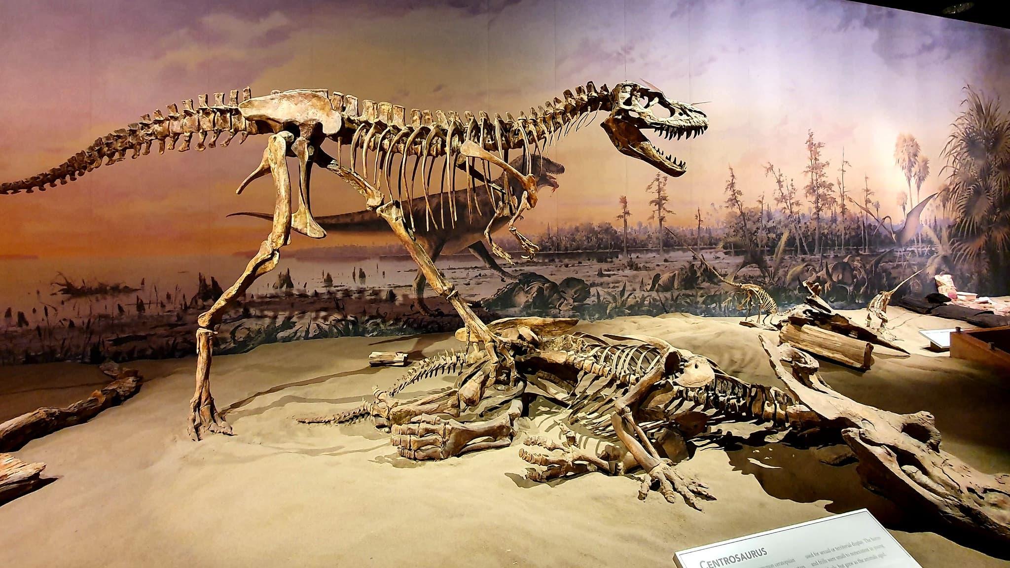 L'extinction des dinosaures causée par une comète et non un astéroïde, selon une étude - BFMTV