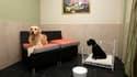 """A Vincennes, dans une chambre d'""""Actuel Dogs"""", qui se présente comme le premier hôtel de luxe pour chiens en France. Cet établissement de la banlieue parisienne est doté de piscines chauffées, de salons de massage et ses fondateurs Devi et Stan Burun prop"""