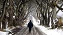 Cette route de hêtres tortueux près d'Armoy en Irlande du Nord figure la Route royale dans Game of Thrones.