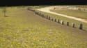 """A moins de trois kilomètres du célèbre site de Stonehenge, 90 pierres couchées et agencées en forme de """"C"""" ont été découvertes."""