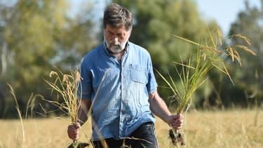 Le riziculteur français riziculteur Bernard Poujol, fournisseur de fabricants français de saké, dans l'un de ses champs.