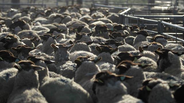 Un enclos de moutons en France le 6 mars 2015. (photo d'illustration)