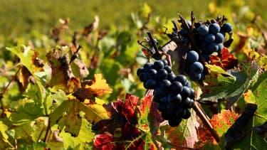 Le dispositif, permis par Bruxelles et financé sur fonds européens, subventionne la transformation des vins invendus en alcool qui servira dans la fabrication de bioéthanol, de parfums ou de gel hydroalcoolique.