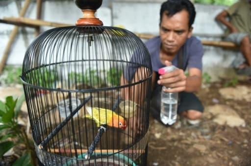 Un homme hydrate un loriquet avant qu'il ne participe à un concours de chant à Jakarta le 7 janvier 2016