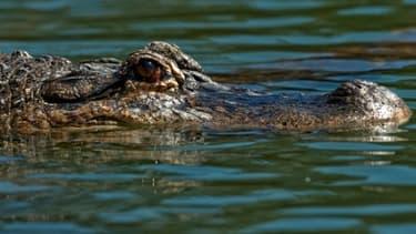 Un jeune homme a été grièvement blessé par un saur dans la piscine d'un complexe touristique au Mexique.