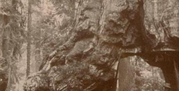 Le passage d'une calèche au début du XXe siècle