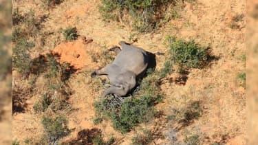 Le mystère autour de la mort d'au moins 275 éléphants au Botswana
