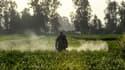Un homme arrose un champ avec des pesticides (photo d'illustration)