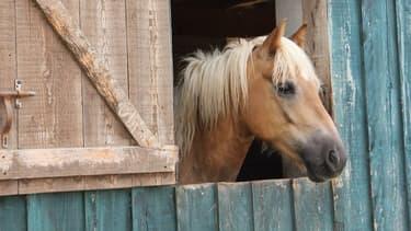 Un poney à la Motte-Feuilly dans l'Indre. (photo d'illustration)