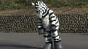 Le gardien d'un zoo de Tokyo a dû se déguiser en zèbre pour un exercice.