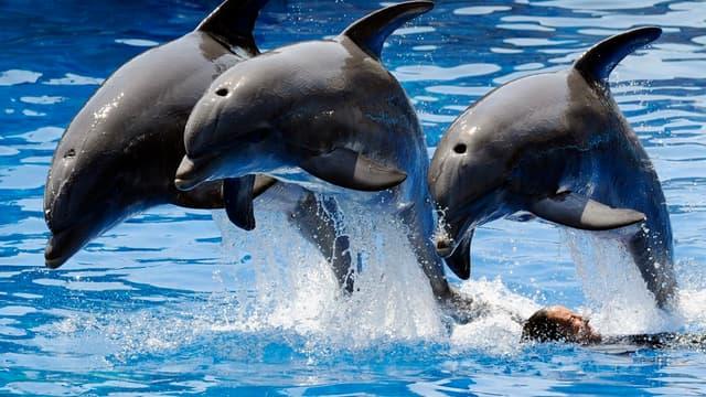 Un arrêté publié au Journal Officiel interdit la reproduction des animaux détenus dans les parcs aquatiques.