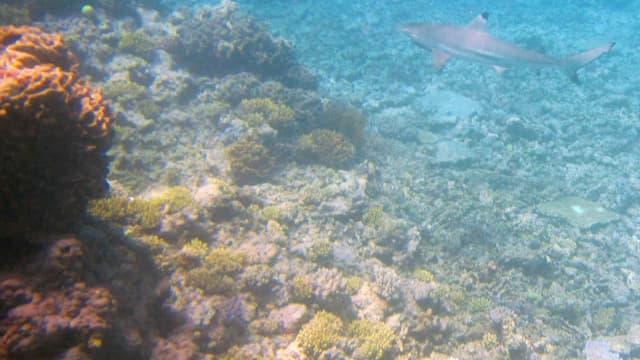 La Grande barrière de corail. (Photo d'illustration)