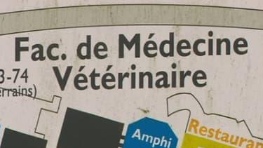 Enseigne devant la faculté de médecine vétérinaire à Liège