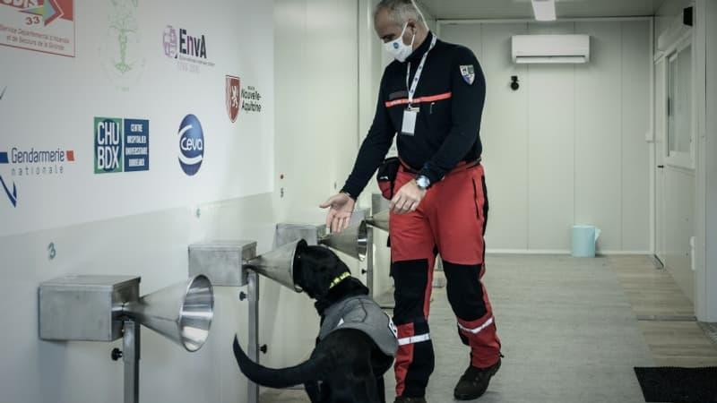 Des centaines de chiens renifleurs pour dépister le Covid-19 déployés dès cet été en France