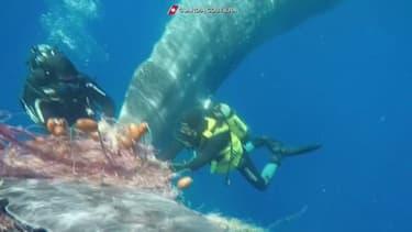 Italie: Une baleine piégée par un filet de pêche libérée par des gardes-côtes