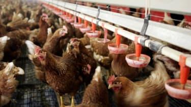 L'Arabie saoudite a suspendu l'importation de volailles, d'oeufs et de produits laitiers de sept départements du sud-ouest de la France à cause d'une épidémie de grippe aviaire - Lundi 18 janvier 2016