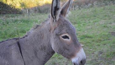 L'âne Chouchou s'est échappé de son enclos lundi 28 mai.