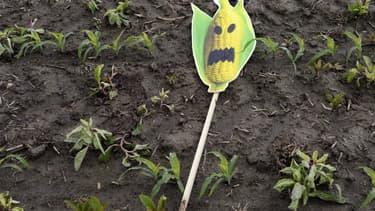 Un symbole anti-OGM dans un champ du sud de la France