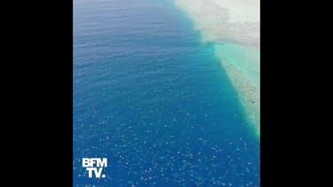 Les images spectaculaires de milliers tortues réunies pour pondre près de la grande barrière de corail