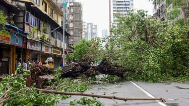 Un arbre déraciné après le passage du cyclone Tauktae à Mumbai (Inde), le 18 mai 2021.